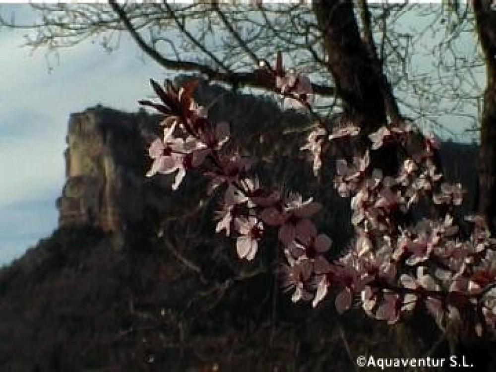 Muela del conde primavera